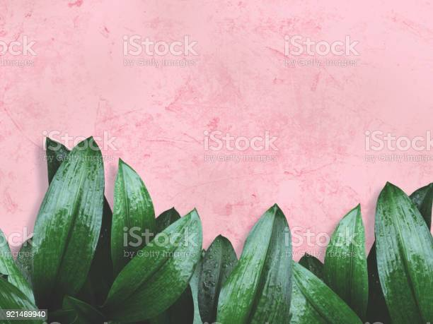 Photo of green leaves over pink painted wall