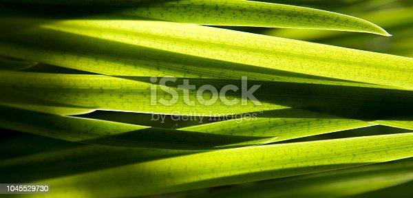 Fresh Green  Leaves. Iris