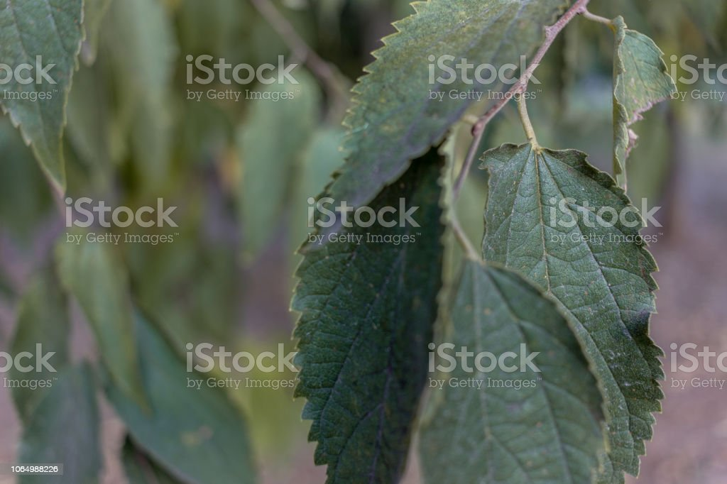 Green leaves - foto stock
