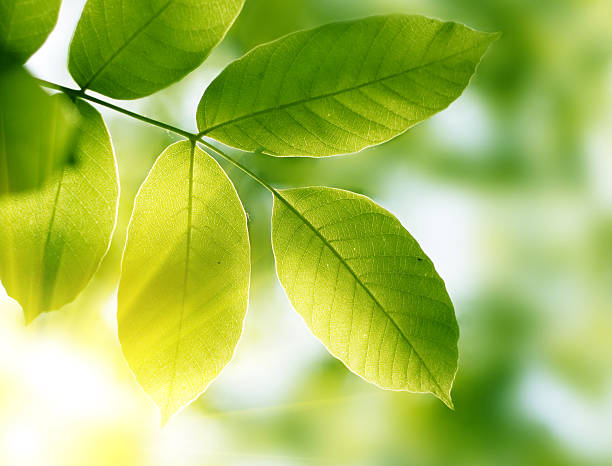Grüne Blätter – Foto