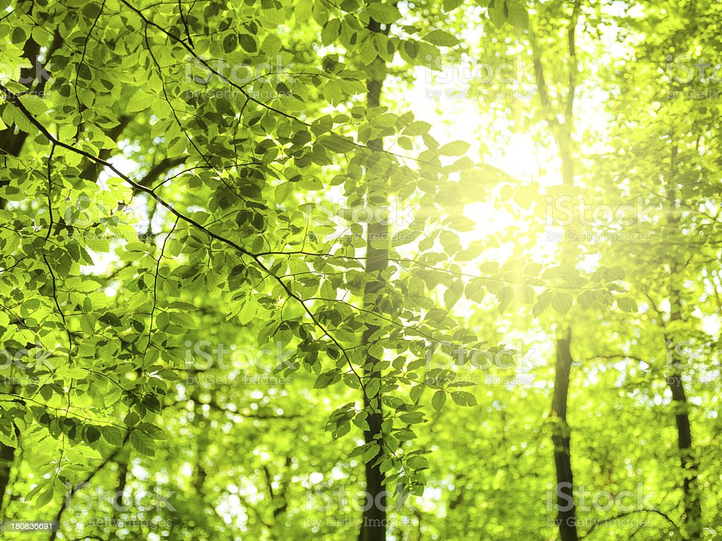 Green leaves royalty-free stock photo