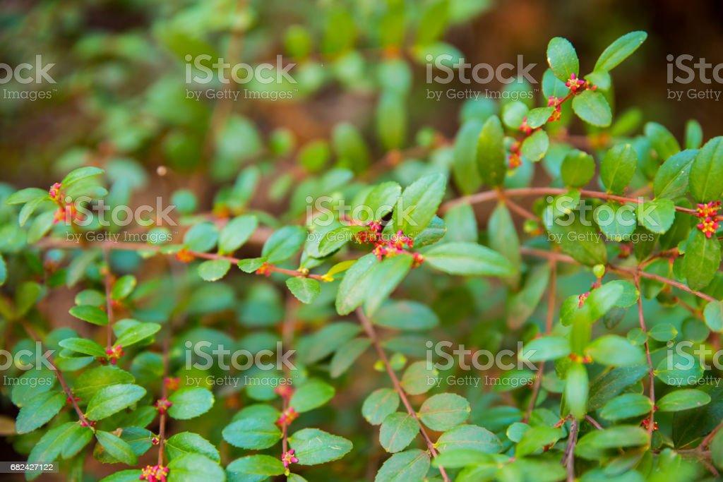 Green Leaves photo libre de droits