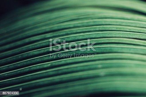 666980960 istock photo Green Leaves 857924330