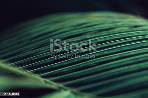 666980960 istock photo Green Leaves 857924808