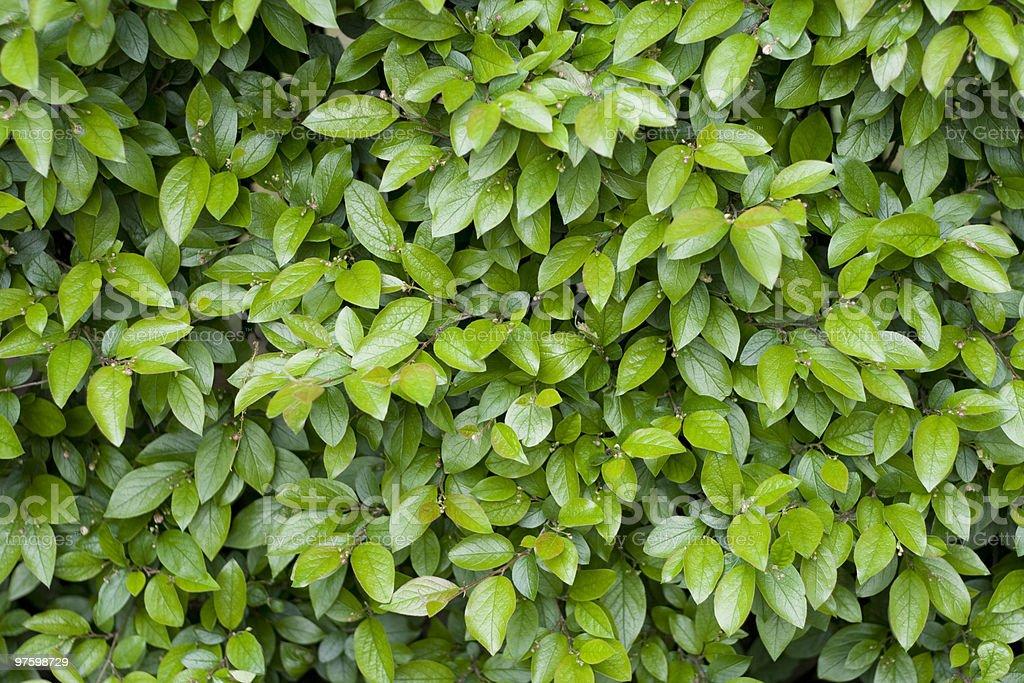 Green leaves royaltyfri bildbanksbilder