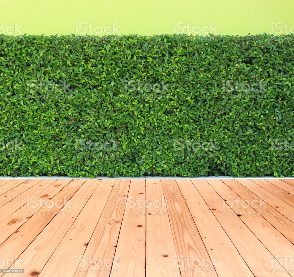 green leaves plant with wood floor on vertical garden wall stock photo