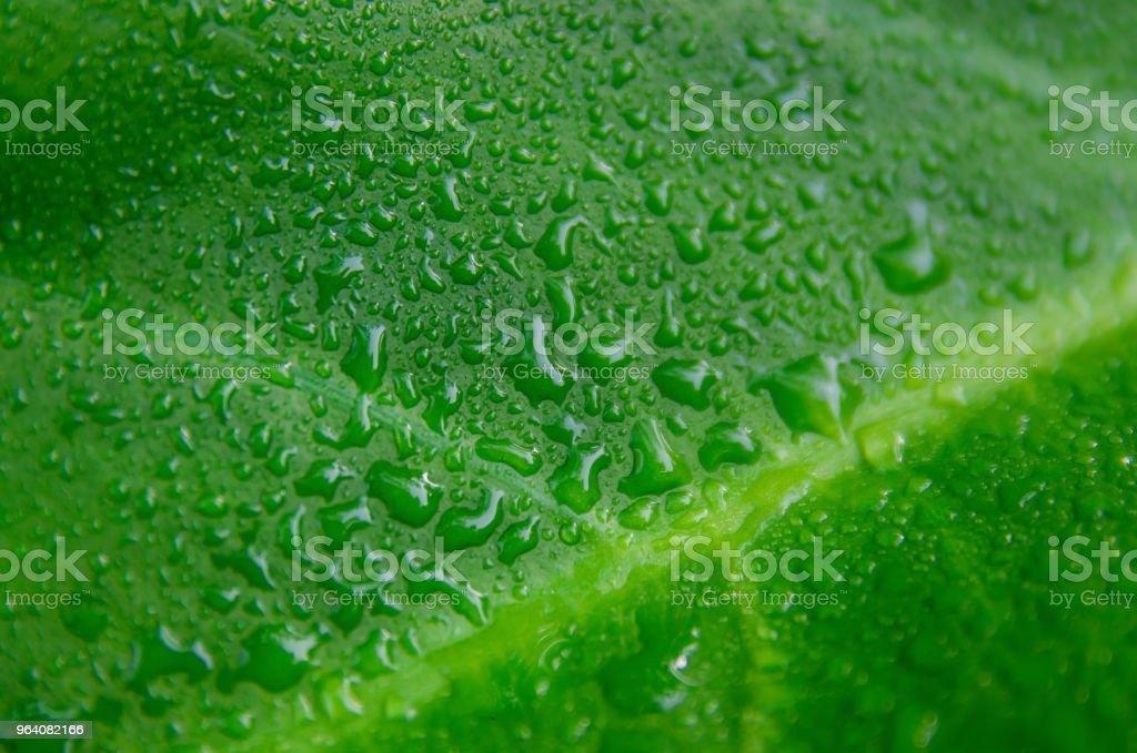 緑の葉の質感と一滴の水、緑の葉の詳細、壁紙します。 - まぶしいのロイヤリティフリーストックフォト