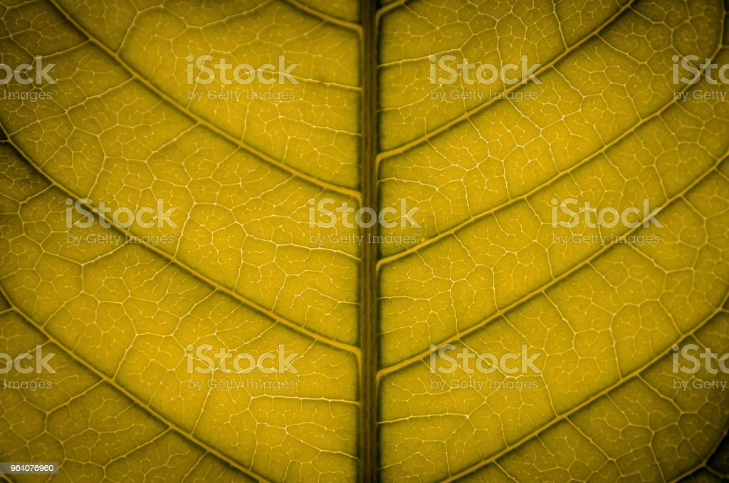 Green leaves texture and leaf fiber, Wallpaper by detail of green leaf. - Royalty-free Abstract Stock Photo