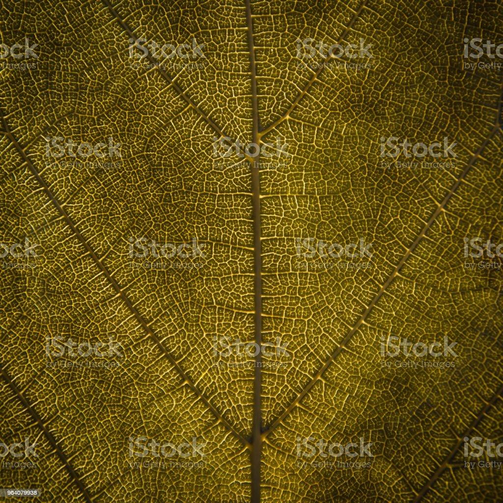 緑の葉のテクスチャと葉繊維、緑の葉の壁紙。 - まぶしいのロイヤリティフリーストックフォト