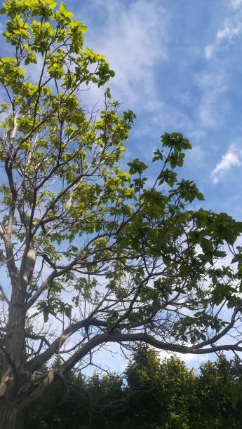 hojas verdes, ramas de árboles. - monse del campo fotografías e imágenes de stock