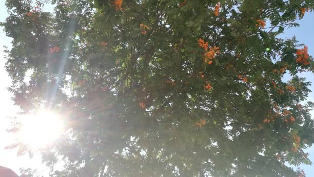 Hojas verdes, ramas de árboles. - foto de stock