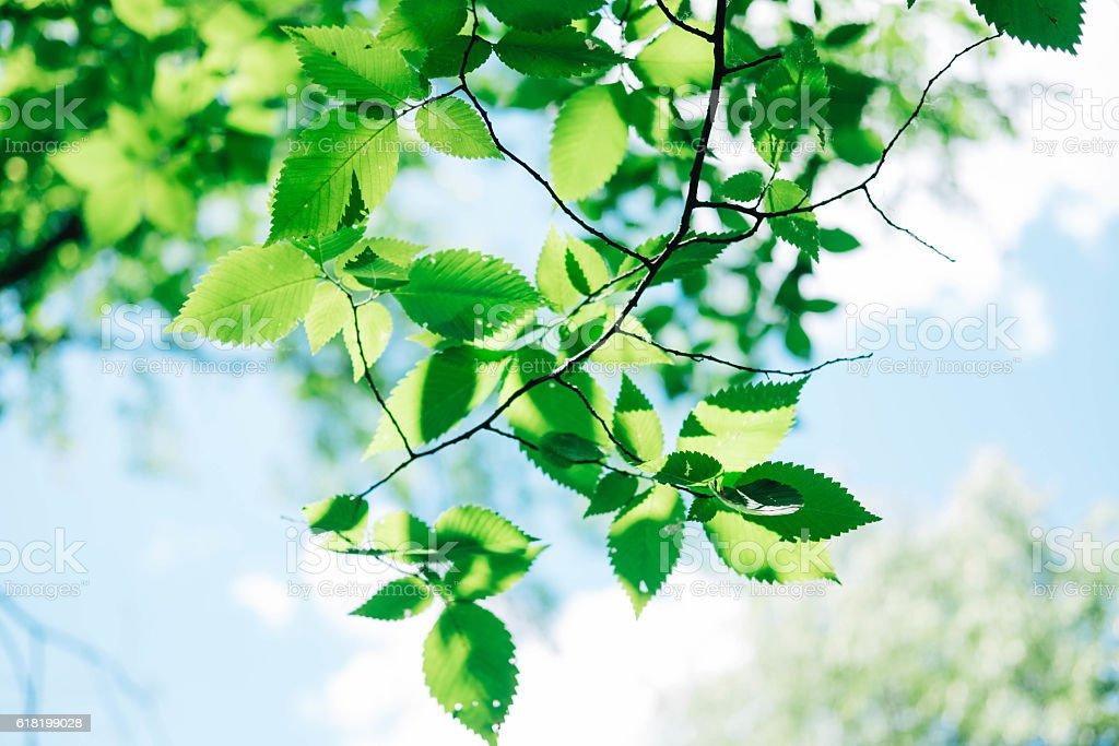 Green leaves under sunlight stock photo