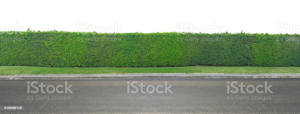 Green leaves wall and asphalt road isolated on white background stock photo