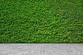 緑の葉の壁を背景にグレーのレンガのフロアーです。