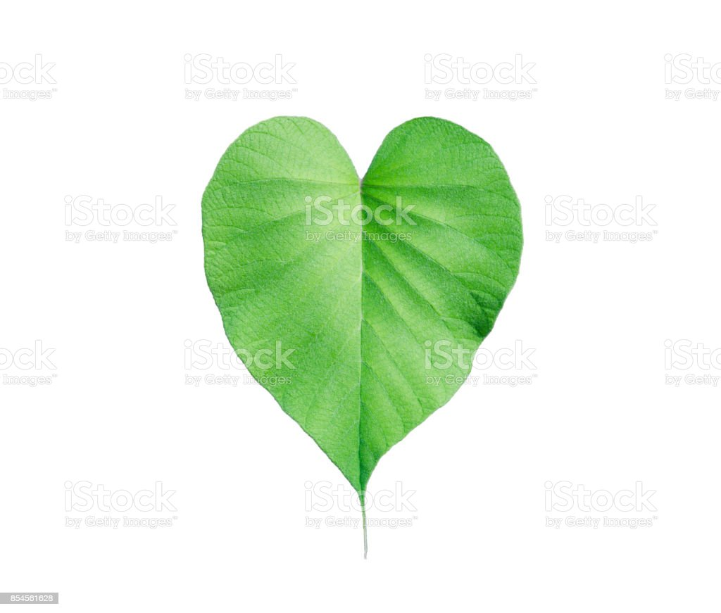 grüne Blätter mit schönen herzförmigen isolierten auf weißen Hintergrund. – Foto