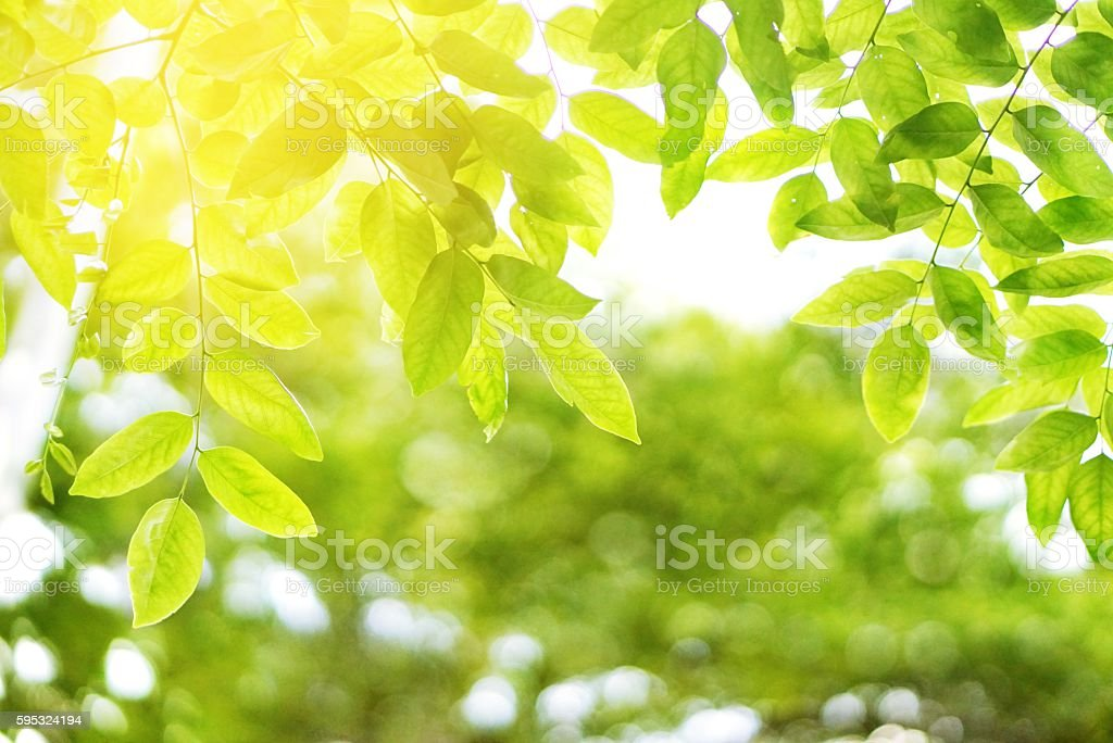 green leaves with blur bokeh spring or summer background – Foto
