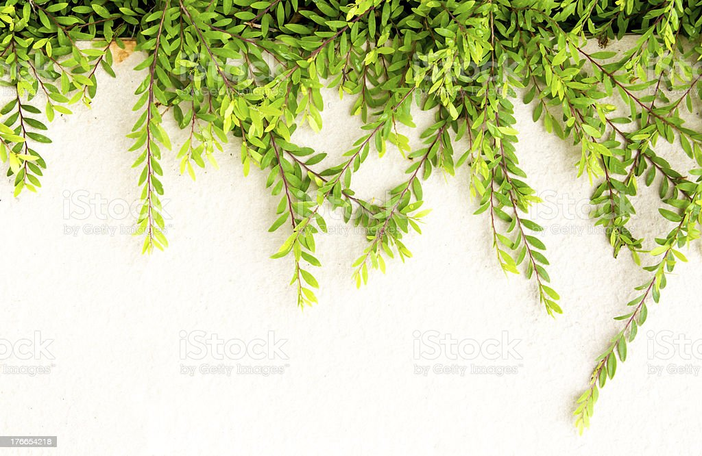 Green leaves with  Concrete floor royalty-free stock photo