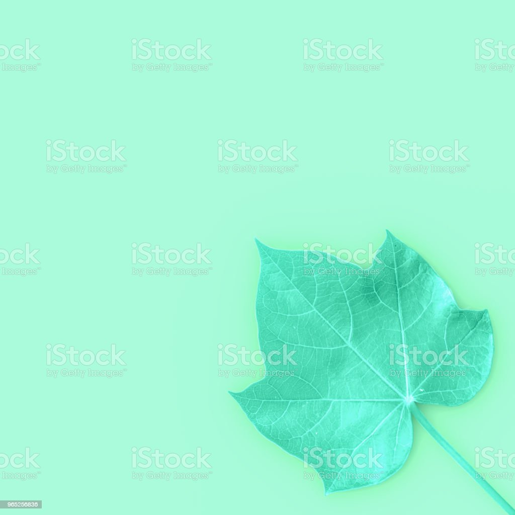 green leaves with copy space for your text and top view background royalty-free stock photo