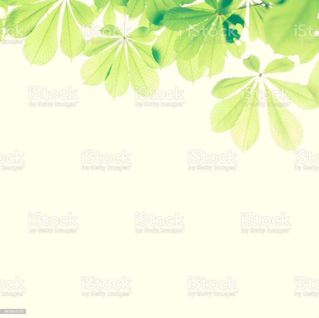 Folhas verdes com espaço para texto - foto de acervo