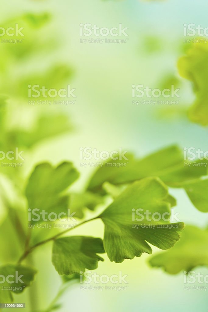 Green leaves with selective focus royalty-free stock photo