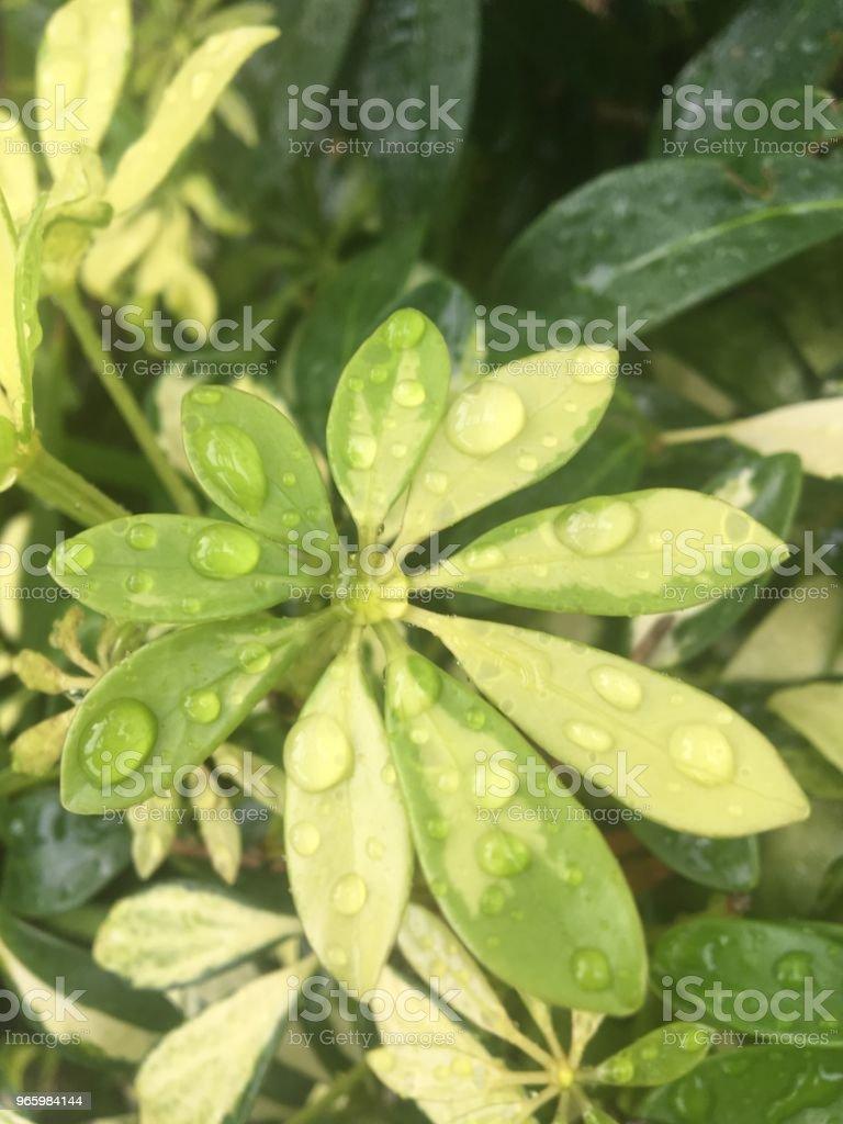 Gröna blad med vattendroppar - Royaltyfri Detaljbild Bildbanksbilder