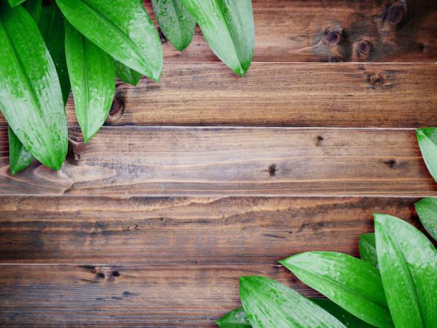 grünes blatt mit wassertropfen auf vintage braun holz - tropfenblatt tisch stock-fotos und bilder