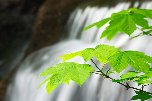 green leaves with waterfall in the background stock photo