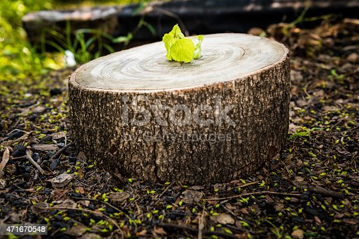 istock Green leaves with wood stump 471670548