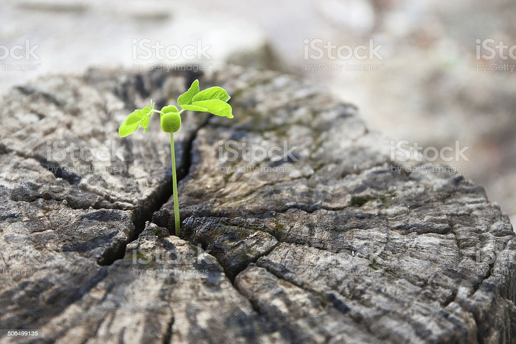 Green leaves with wood stump stock photo
