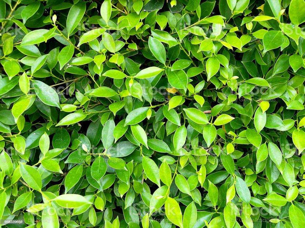 Get Plant Stem Texture Gif