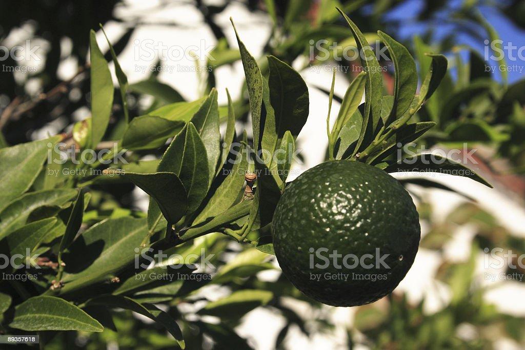 Green lemon royaltyfri bildbanksbilder