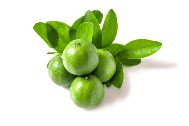 Green lemons stock photo