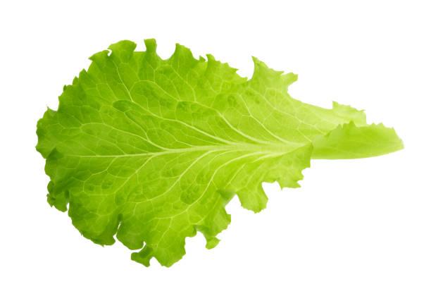 綠色生菜葉隔離無陰影 - 生菜 個照片及圖片檔