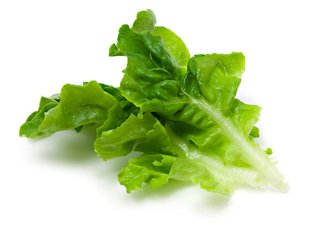 Green lettuce leaf stock photo