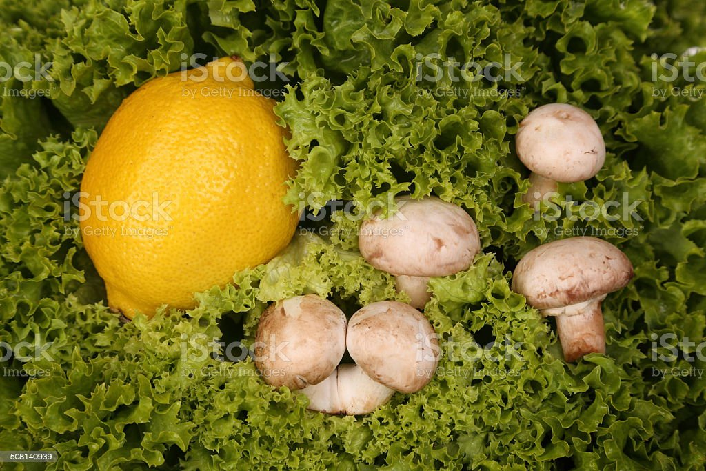 Green lettuce leaves with lemon and mushrooms stock photo