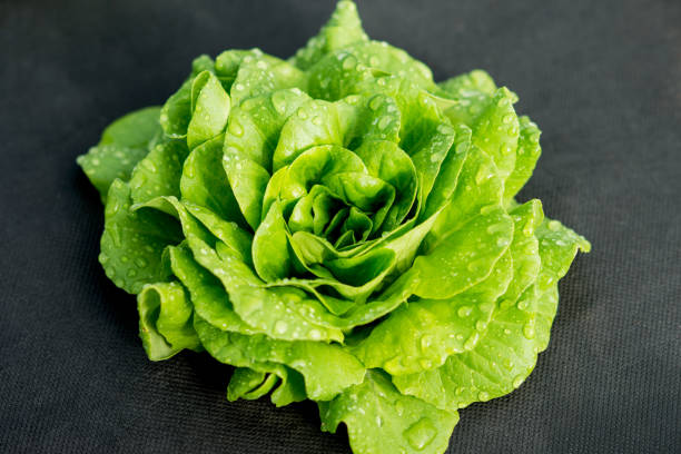 green lettuce green lettuce leaves, natural growth butterhead lettuce stock pictures, royalty-free photos & images