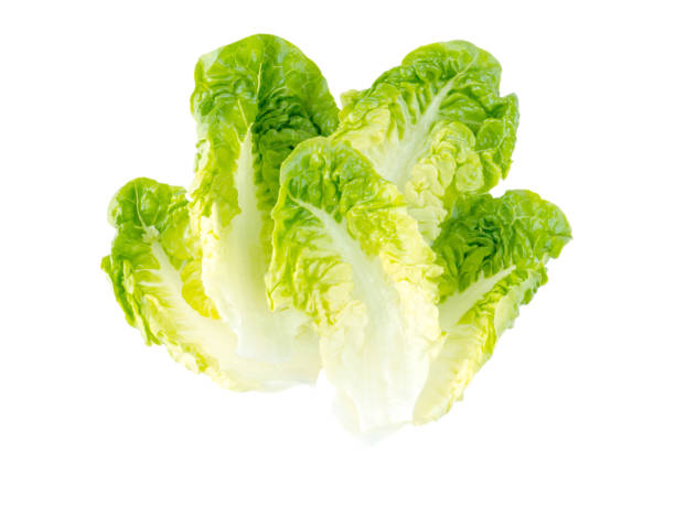 Green lettuce salad leaves Green lettuce salad leaves isolated on white romaine lettuce stock pictures, royalty-free photos & images