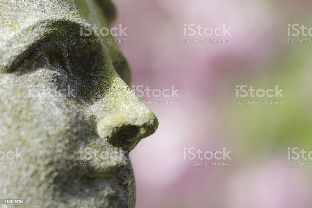 Angel face with soft pink spring blossom royalty-free stock photo
