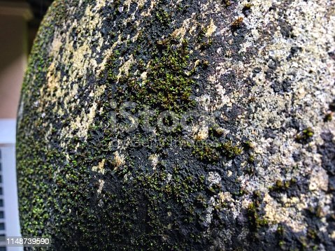 Green lichens grow and expand on jar surface in the rain season.
