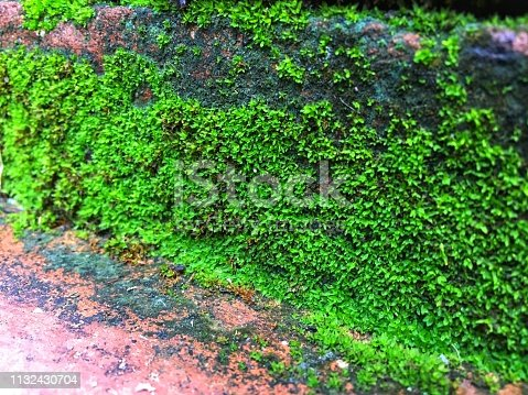 Green lichens grow and expand on orange brick staircase in the rain season. Soft focus