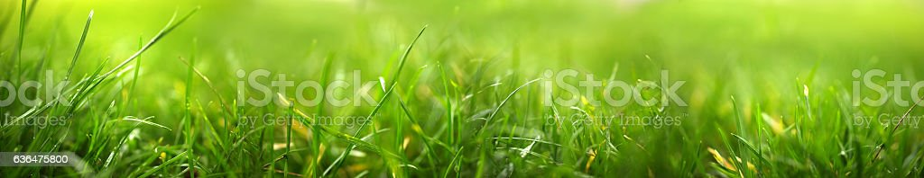 green life stock photo