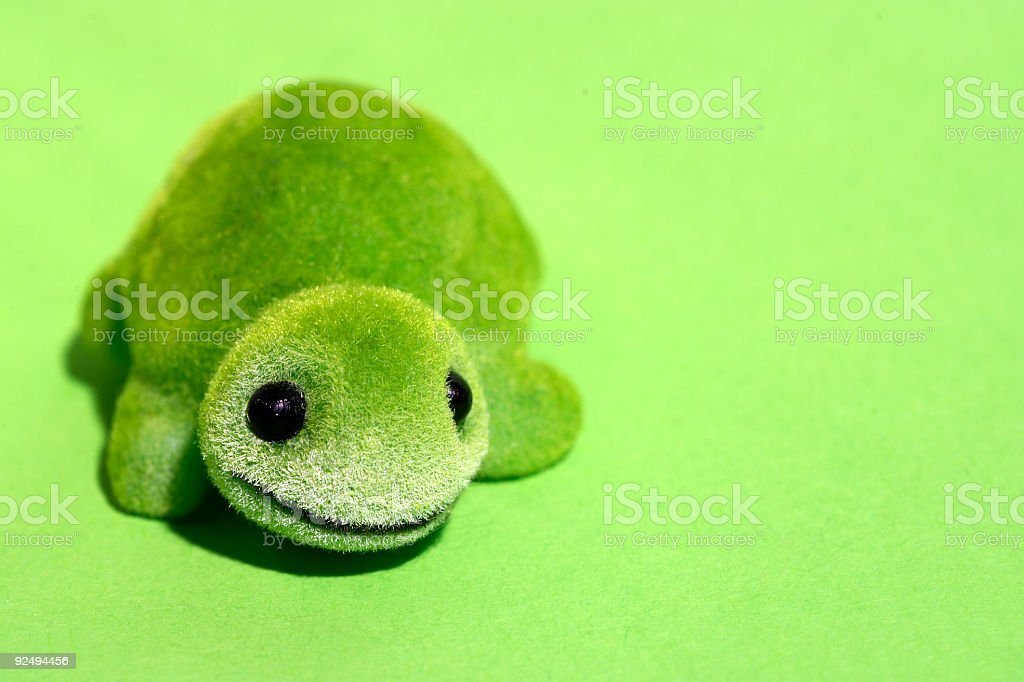 Green little turtle royalty-free stock photo