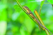 green lizard climbing plants in the morning