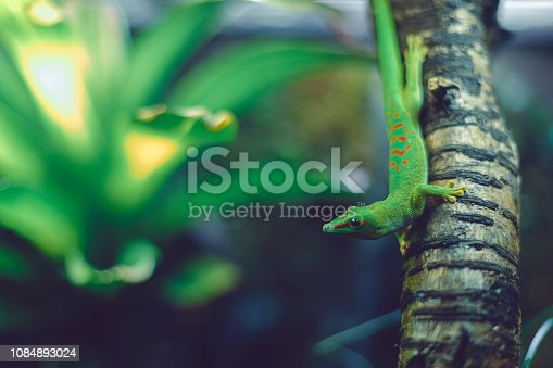 glass - material, nature, lizard, green, plants, aquarium