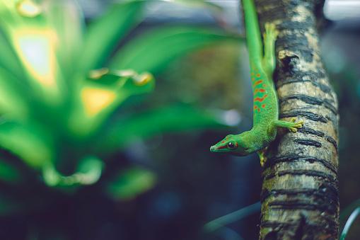 glass - material, nature, lizard, green, plants, aquarium