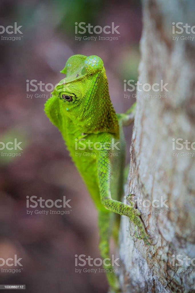 Green lizard on a tree. Beautiful closeup animal reptile in the...