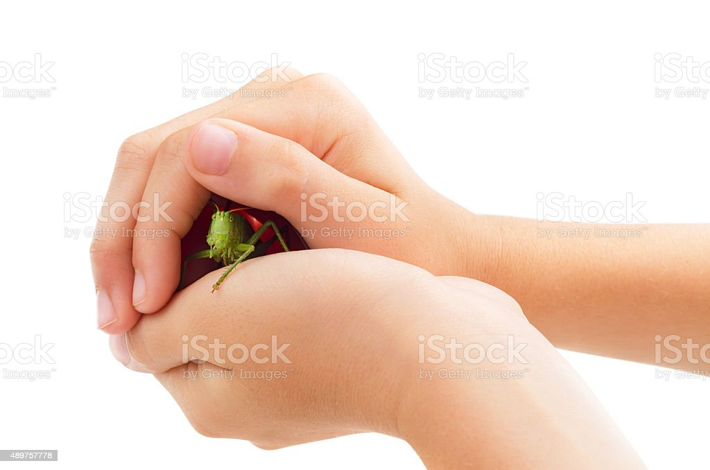 Green locust in hands isolated stock photo