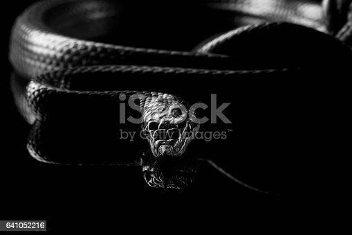 istock Green long nosed snake, Rhinoceros Ratsnake 641052216