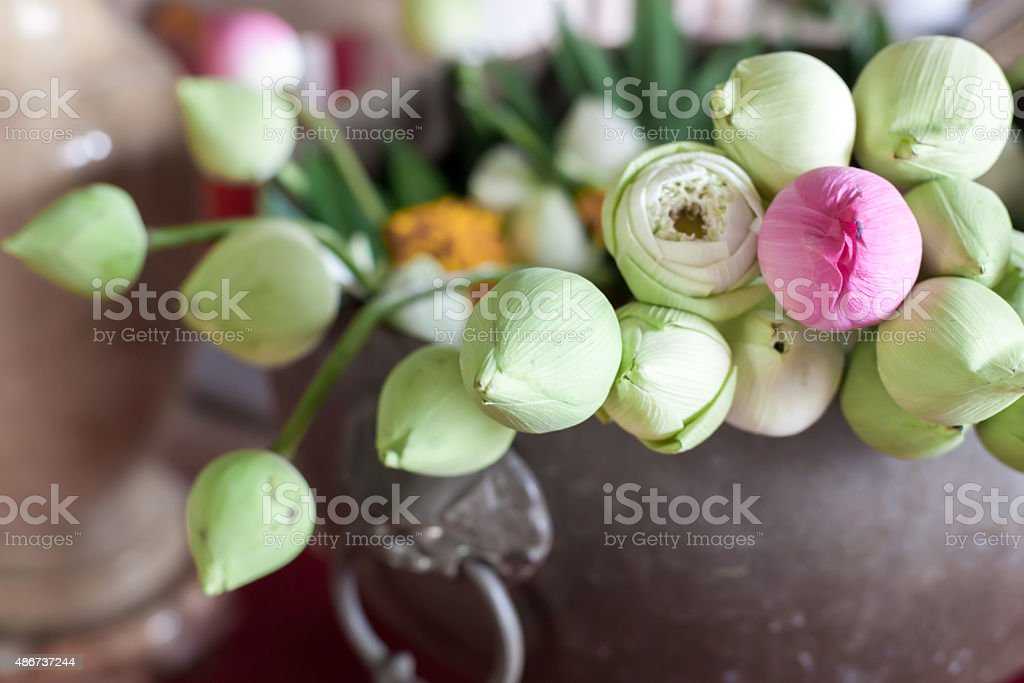 Green Lotus Flowerwhite Lotus Flower And Red Lotus Flower Stock