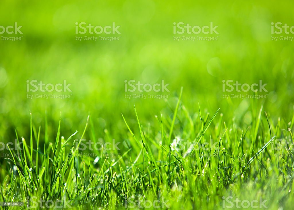 Green luscious grass. stock photo